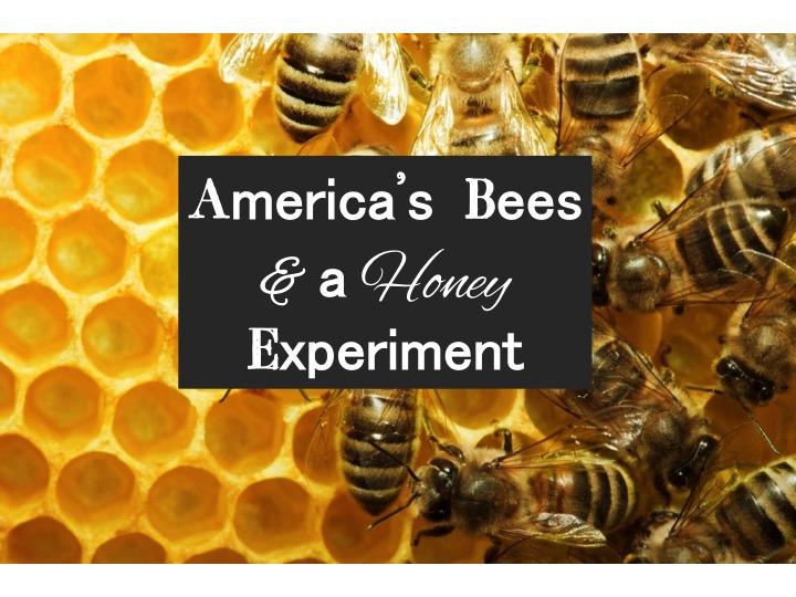 America's Bees & a Honey Experiment