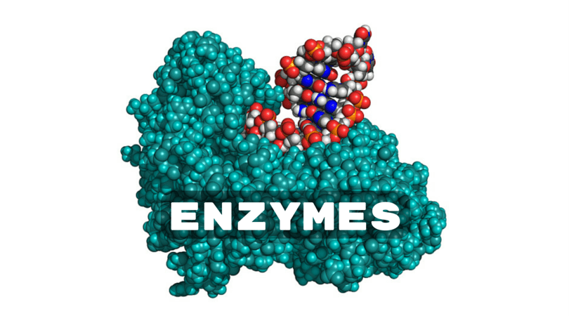 Enzymes & Your Digestion