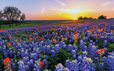 Springtime: Evidence of LIFE