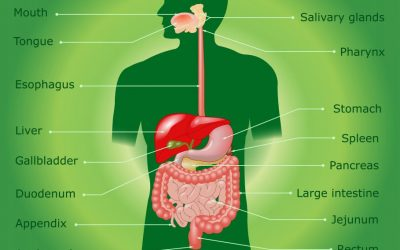 What are the benefits of digestive enzymes?