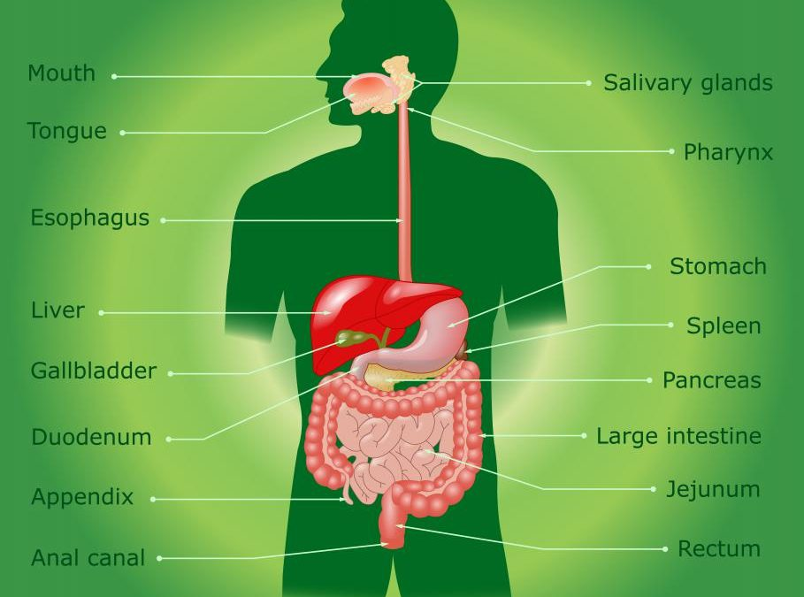 What Are The Benefits Of Digestive Enzymes Clearview