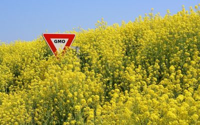 Great Reasons to Avoid Vegetable Oils and What To Use Instead