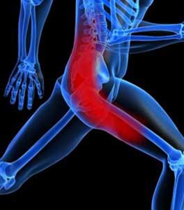 The Sciatic Nerve, Piriformis Muscle & Sacro-Iliac Joint