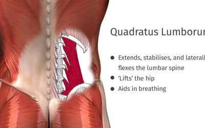 Does Your Quadratus Lumborum Need to be Stretched?