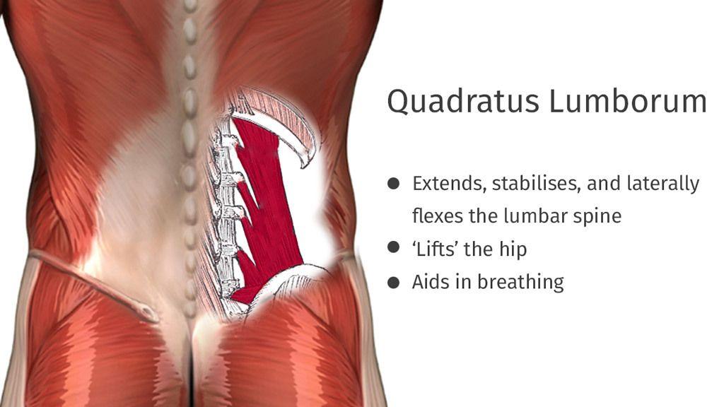 Does Your Quadratus Lumborum Need to be Stretched?
